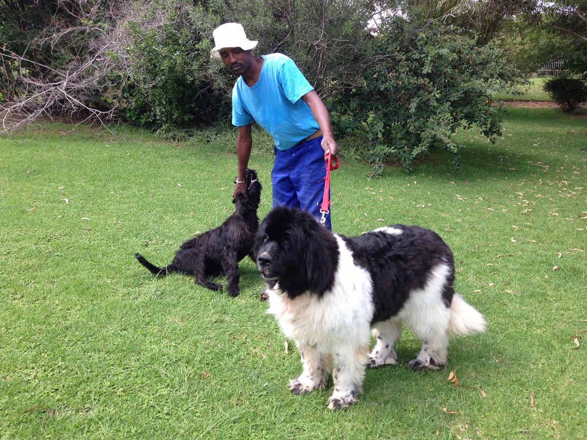 Sun Valley - Dog Boarding Kennels & Cattery - Gauteng
